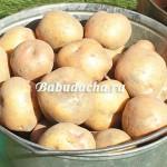 Как прорастить картофель на посадку?