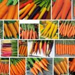Какой сорт моркови лучше? Обзор
