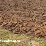 Как подготовить почву и грядку под морковь?