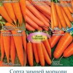 Посадка моркови под зиму (осенью)