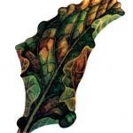 У свеклы скручиваются и сохнут листья: почему и что делать?