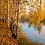 Какие деревья желтеют первыми: рассказ для детей