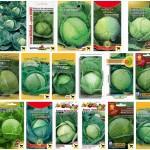Характеристика сортов капусты белокочанной
