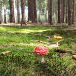 Стих про грибы в лесу (для детей)