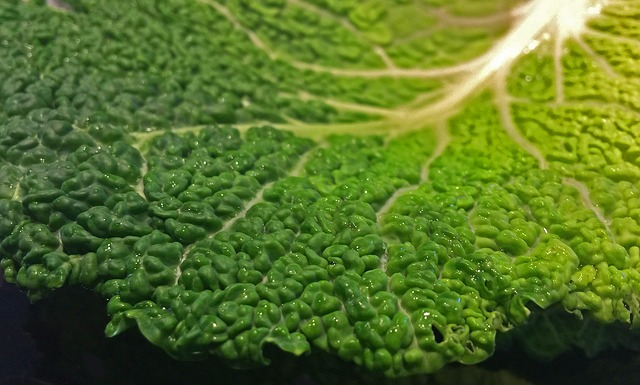 savoy-cabbage-959094_640