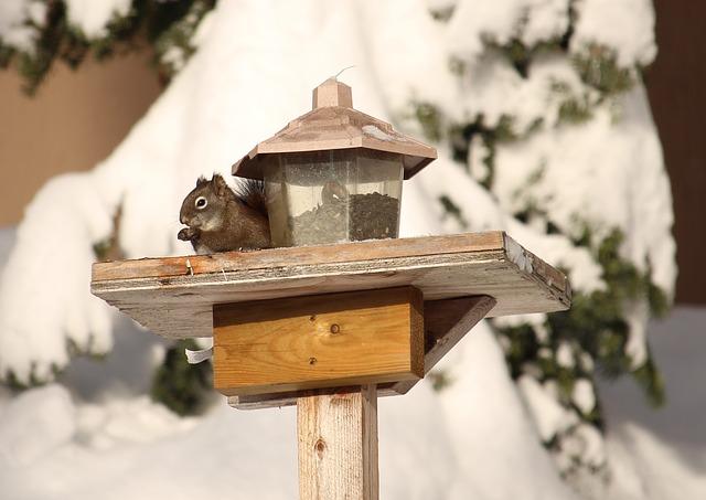 squirrel-581566_640