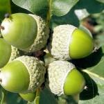 Как вырастить дерево из семени?