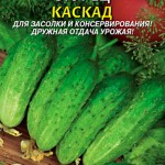 Засолочные сорта огурцов: описание с фото