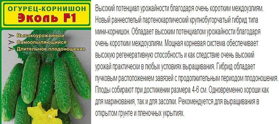 Огурцы для выращивания в сибири 971