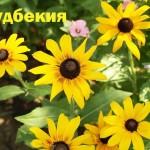 Какие цветы сажают в марте?