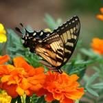 Как замачивать семена цветов перед посадкой?