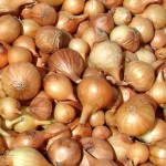 Как сажать лук севок весной?