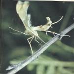 Короткие рассказы про насекомых для детей 5-6 лет