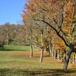 Чем опрыскивать деревья осенью?