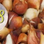 Тюльпаны осенью: когда сажать, в каком месяце? Личный опыт +Лунный календарь 2018