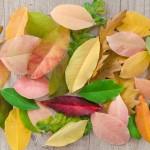 Почему опадают листья с деревьев осенью? Читаем вместе с детьми