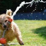 Конкурсы на Новый год Собаки 2018. Идея сценария «Под знаком Желтой Собаки»