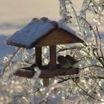 Чем можно кормить птиц зимой? Читаем детям