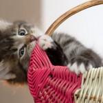 Сказка про кошку и мышку