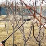 Сад весной: Чем опрыскивать деревья и кустарники, а главное — когда?