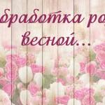 Розы весной: Чем обработать от болезней и вредителей?