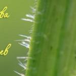 Личный опыт: Проверенные средства от муравьев на даче