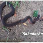 Дачный участок атаковали змеи: Как от них избавиться?