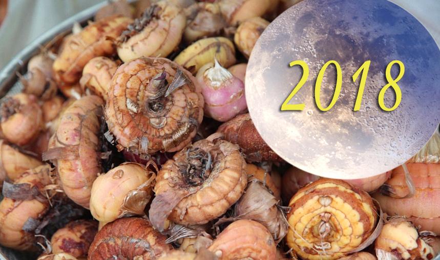 Выкапываем гладиолусы по Лунному календарю