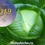 Сроки уборки капусты: Когда убирать капусту с грядки в 2019 году?