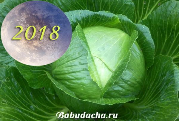 Лунный календарь: Когда убирать капусту осенью 2018 года