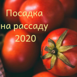 Рассада помидоров: Когда сажать в 2020 году?