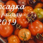 Рассада помидоров: Когда сажать в 2019 году?