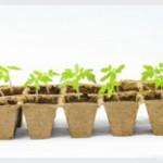 Посевная 2020: Когда садить перцы и томаты на Урале?