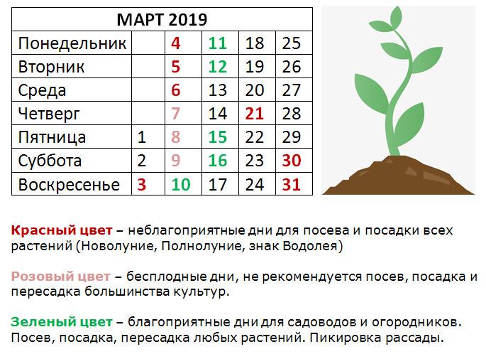 2019-03-04_125325