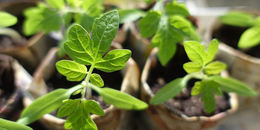 Обзор средств: Чем подкормить рассаду