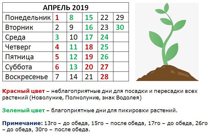 Таблица пикировки рассады в апреле 2019 года