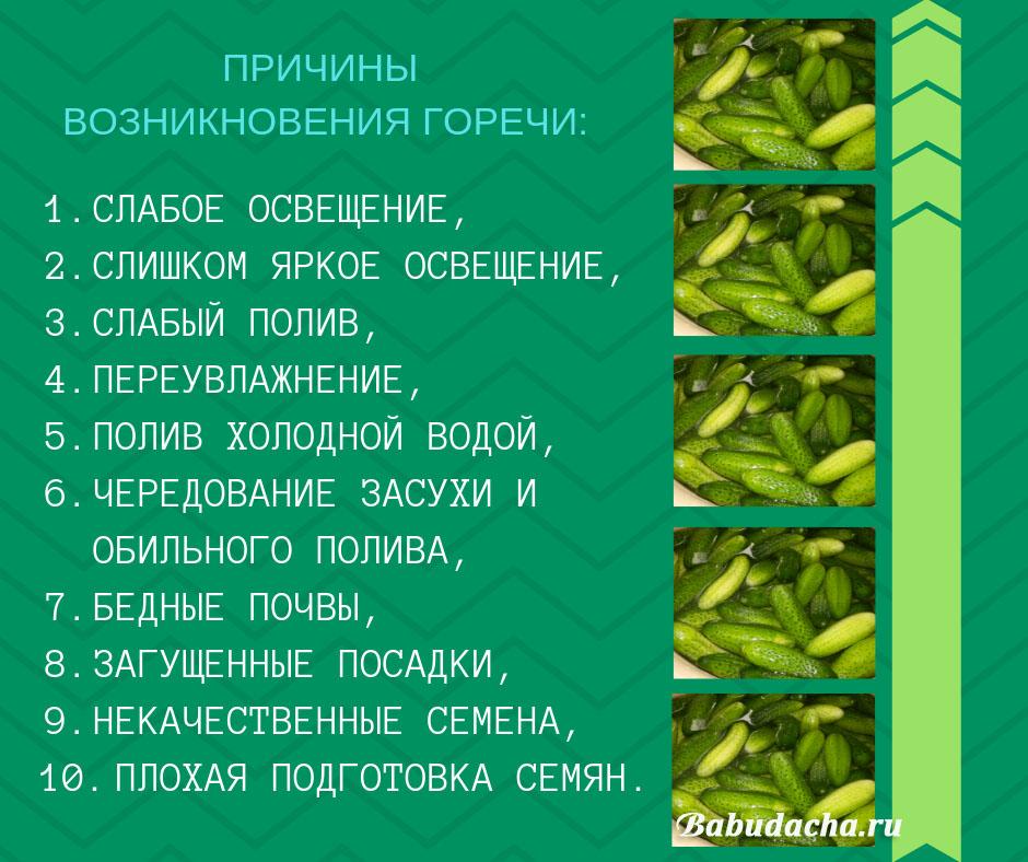 Инфографика: 10 причин горьких огурцов