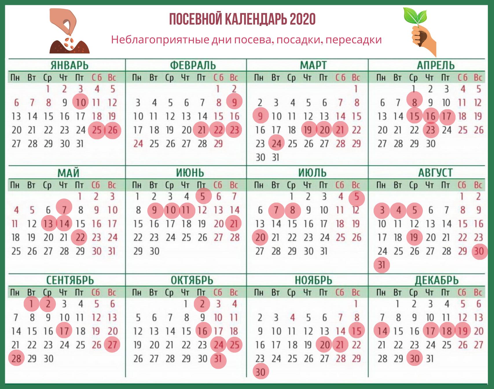 Лунный посевной календарь 2020 (посев, посадка, пересадка)